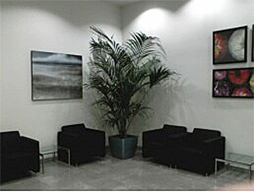 Interior Landscape Project by Bob's Tropicals in Phoenix Valley of the Sun